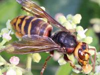蜂と蟻の図鑑